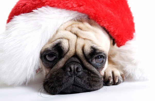 Sad-Dog-In-Christmas-Hat-dp